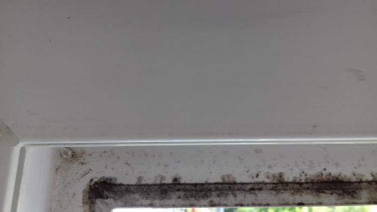 Favorit Schimmel auf Fensterdichtungen im Rahmen GB83