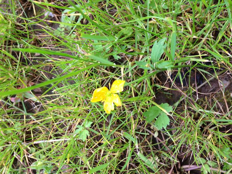neu gesäter Rasen wird nach wenigen Monaten gelb (und hat viele ...