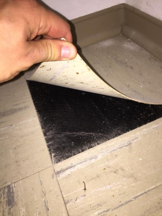 Bekannt PVC-Kleber/Bitumenkleber unter Laminat in ETW XL14