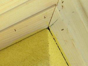 wespennest zwischen dach und d mmung nachbesserungsfall. Black Bedroom Furniture Sets. Home Design Ideas