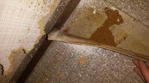 Berühmt Cushion Vinyl Asbest NV49
